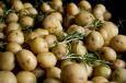 Job of the week: Harvest new potatoes
