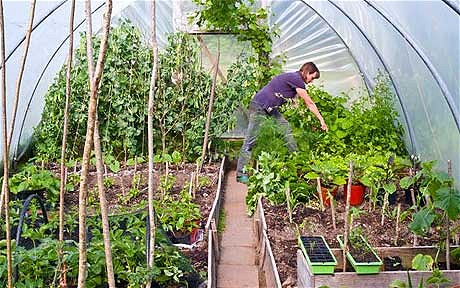 Polytunnel And Seed Potato Event News Ardcarne Garden