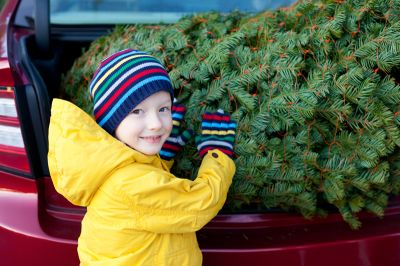 Freshly Cut Christmas Trees Now Available