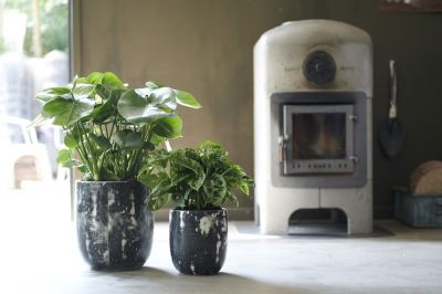Houseplant of the month: Monstera