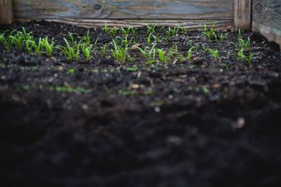 How to improve your soil at this time of year