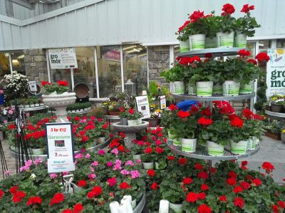 Garden Centres Open with Restrictions