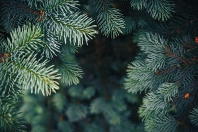 Tips for recycling or reusing your Christmas Tree