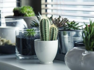 Top 5 Autumn Indoor Plants